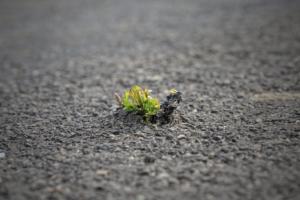 Resiliens, tålighet, motståndskraft – att snabbare komma igen efter motgångar eller när experter lämnar gynnas av öppet samarbete och kommunikation medarbetare emellan